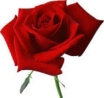 large red rose clipart